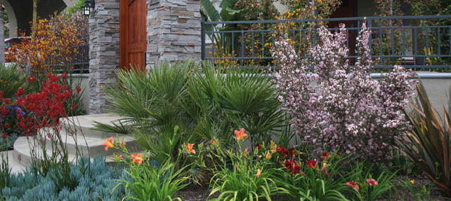Replacing your turf with drought-resistant plants is a money-saving way to bring beauty to your home or business.